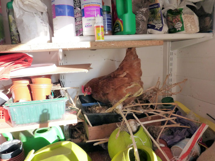 Gwennie in the shed exploring the garlic